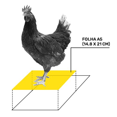 galinha-a5 (1)