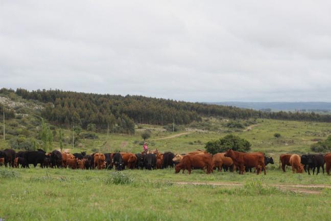 Valle Sol é como um oásis no meio da agricultura industrial do Uruguai, com seus solos arrasados pela expansão da fronteira agropecuária.