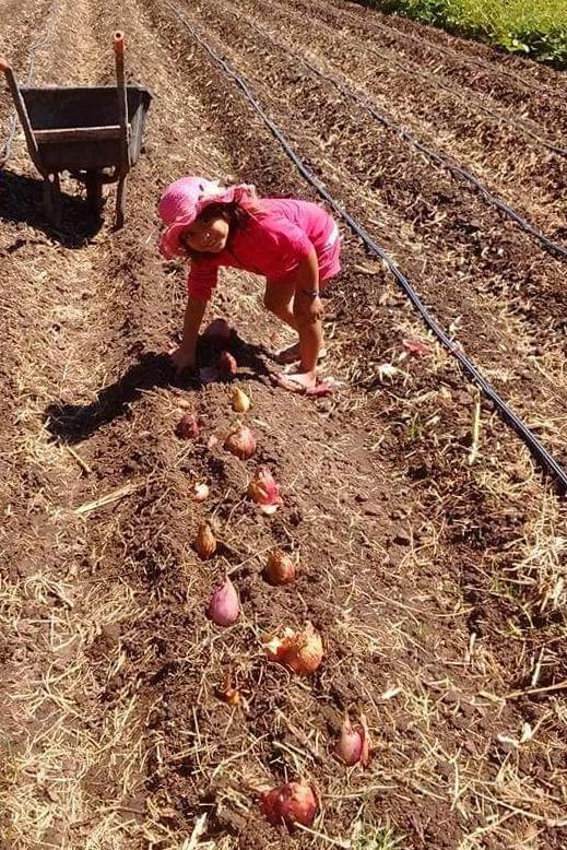 En 20 de abril los niños ayudan en los campos y desde pequeños aprenden a convivir con la naturaleza.