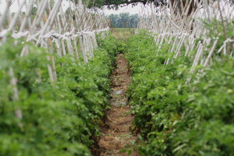 Alimentos agroecológicos, sanos y sin rastros de venenos.
