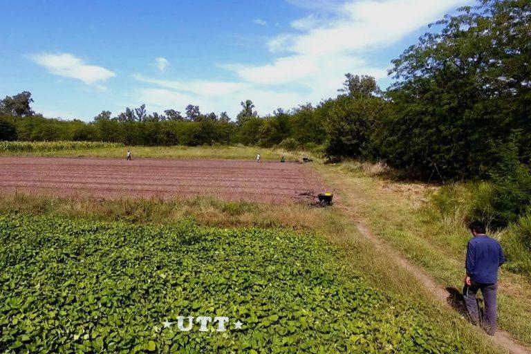 En la colonia 20 de abril hay 54 hectáreas destinadas a la producción de frutas y verduras agroecológicas.
