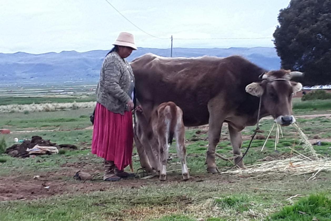 Aditha tiene una lechería, ordeña vacas y elabora quesos para consumo local.