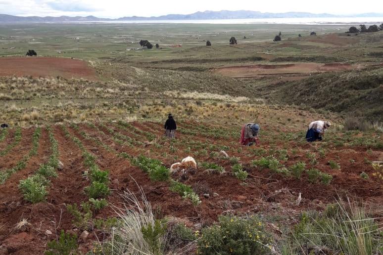 Campesinas bolivianas de  la comunidad Pillapi trabajando la tierra.