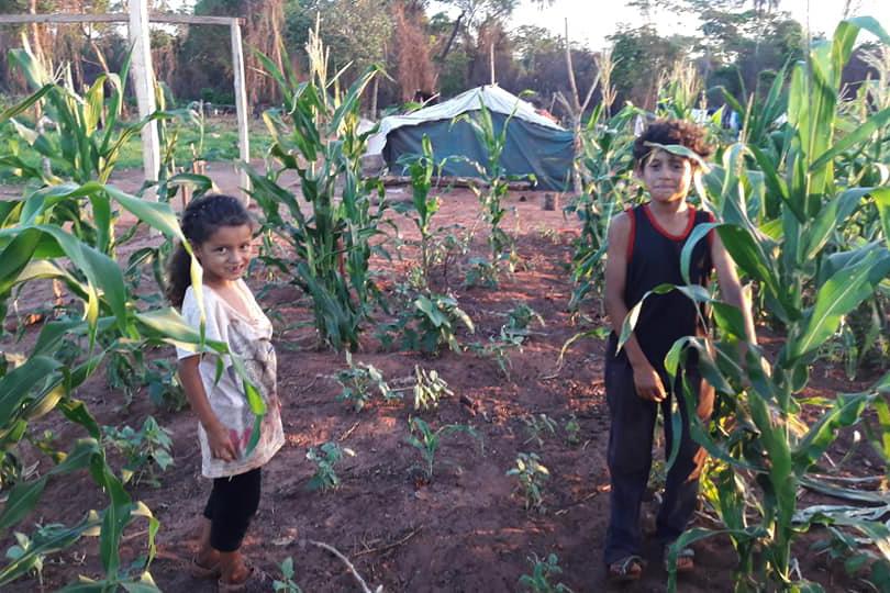 Niños jugando entre cultivos.