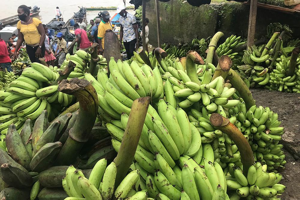 Bananos, la fruta más popular en Quibdó. Foto: Paula Mónaco Felipe